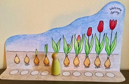 tulipan...evita